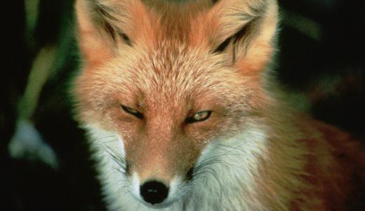 目が細い動物ランキングTOP10!世界一目が細い動物はコイツだ!